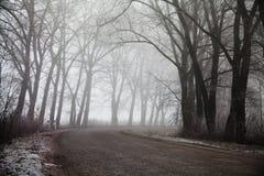 Strada ed alberi nebbiosi Fondo misterioso della foresta Paesaggio di primo mattino, gelo sulla terra effetto del film di rumore Immagini Stock