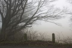 Strada ed alberi nebbiosi Paesaggio di primo mattino, inverno, Germania fotografia stock