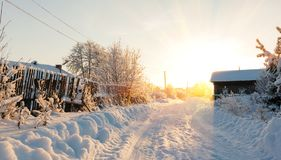 Strada ed alberi rurali di inverno in neve Fotografie Stock Libere da Diritti