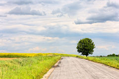 Strada ed albero Fotografie Stock Libere da Diritti