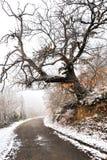 Strada ed albero immagini stock libere da diritti