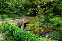 Strada famosa a Hana carica di ponti stretti del un-vicolo, di giri della forcella e di viste incredibili dell'isola, Maui, Hawai Immagine Stock Libera da Diritti