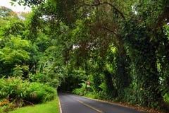 Strada famosa a Hana carica di ponti stretti del un-vicolo, di giri della forcella e di viste incredibili dell'isola, Maui, Hawai Fotografia Stock