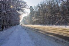 Strada in foresta Immagini Stock Libere da Diritti