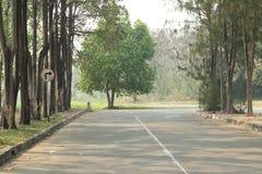 Strada in foresta Fotografie Stock Libere da Diritti