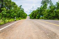 Strada in foresta Immagine Stock