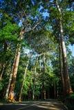 Strada in foresta immagine stock libera da diritti