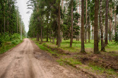 Strada in foresta Fotografia Stock