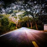 Strada in foresta fotografia stock libera da diritti