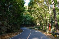 Strada in foresta di mogano sull'isola di Bohol, Filippine fotografie stock libere da diritti