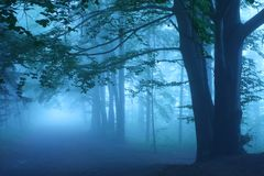 Strada in foresta mistica Fotografia Stock Libera da Diritti