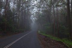 Strada in foresta pluviale in Australia Fotografia Stock Libera da Diritti