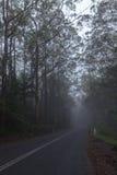 Strada in foresta pluviale in Australia Fotografia Stock