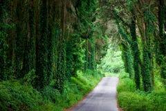 Strada in foresta scura magica Fotografia Stock Libera da Diritti