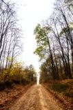 Strada forestale Fotografie Stock