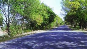 Strada fra gli alberi video d archivio