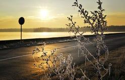 Strada gelida di Autumn Dawn, nebbia sopra il lago ed erba coperta di gelo Fotografia Stock Libera da Diritti