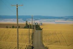 Strada, giacimenti di grano, Washington State fotografie stock