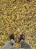 Strada gialla della foglia Fotografie Stock