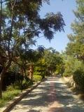 Strada in giardino Immagine Stock