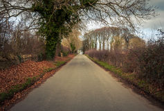 Strada in Gran-Bretagna rurale Fotografia Stock Libera da Diritti