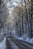Strada innevata in foresta immagine stock
