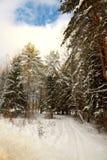 Strada innevata sulla frangia della foresta Immagini Stock