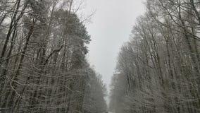 Strada in inverno Fotografia Stock Libera da Diritti
