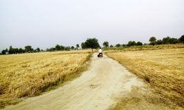 Strada in mezzo di terreno agricolo Immagini Stock