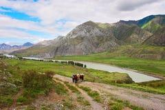 Strada, montagne, due cavalli e mens. fotografia stock