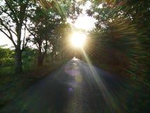 Strada naturale del tunnel dell'albero a tempo di tramonto Fotografia Stock