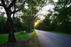 Strada naturale del tunnel dell'albero a tempo di tramonto Immagine Stock