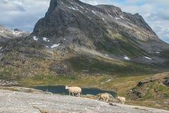 Strada nazionale norvegese RV63 Fotografie Stock