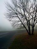 Strada in nebbia Fotografie Stock