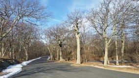 Strada nel boschetto di woods Immagine Stock