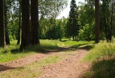 Strada nel boschetto di woods Immagine Stock Libera da Diritti