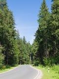 Strada nel boschetto di woods Immagini Stock