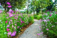 Strada nel giardino Immagine Stock