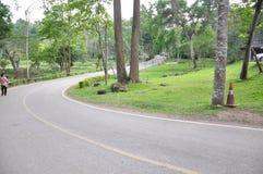 Strada nel parco nazionale Fotografia Stock Libera da Diritti