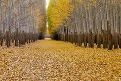 Strada nella caduta che conduce attraverso una foresta in autunno Fotografia Stock