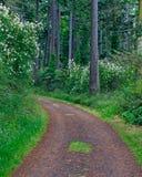 Strada nella foresta Fotografia Stock