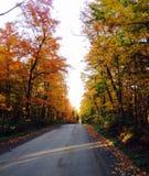 Strada nella foresta Fotografia Stock Libera da Diritti