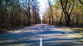 Strada nella foresta Immagine Stock