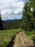 Strada nella foresta Immagini Stock Libere da Diritti