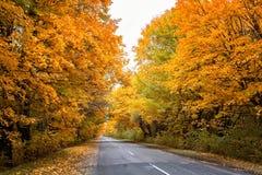 Strada nella foresta autunnale Immagine Stock
