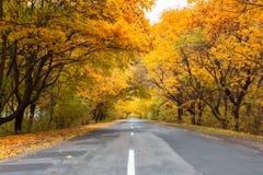 Strada nella foresta autunnale Immagini Stock Libere da Diritti