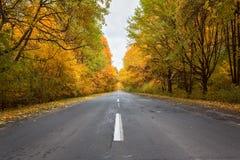 Strada nella foresta autunnale Fotografie Stock Libere da Diritti