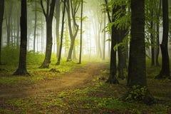 Strada nella foresta del fogy immagini stock libere da diritti