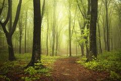 Strada nella foresta del fogy Immagini Stock