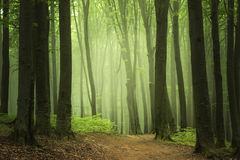 Strada nella foresta del fogy Fotografie Stock Libere da Diritti